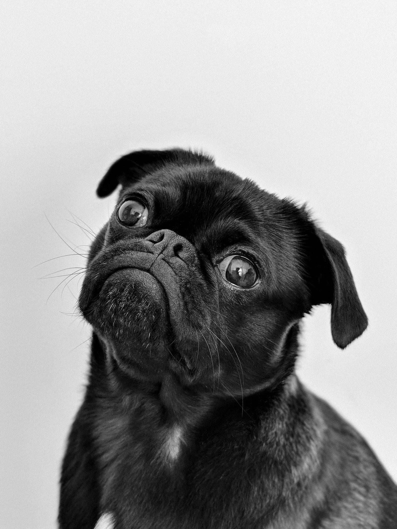 Immagine di un cane